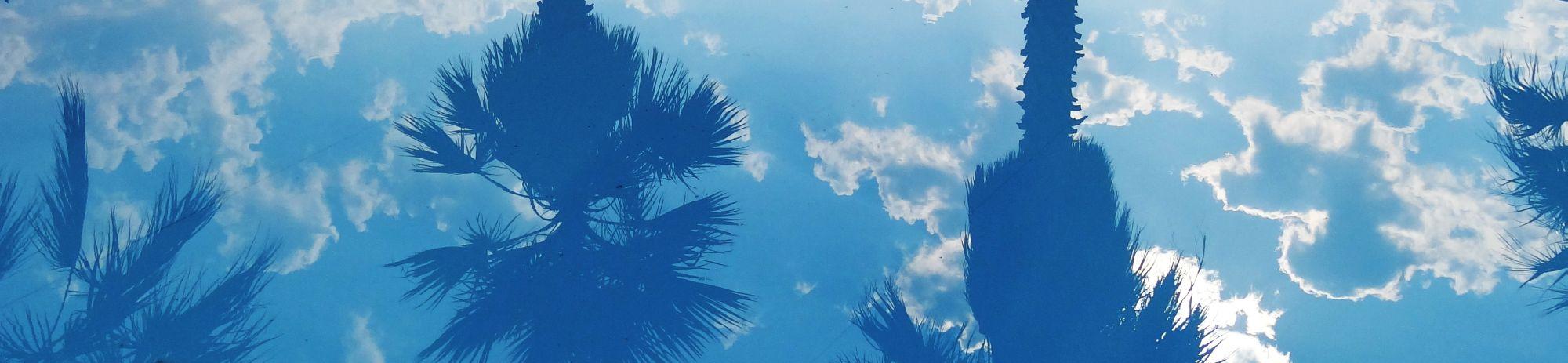 Wie Pools und Baumrodung zusammenpassen-Pool und Palmen
